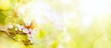 abstract Spring flower background; Easter landscape - 141410385