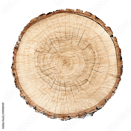 smooth cross section brown tree stump slice with age rings cut fresh from the fo Poster