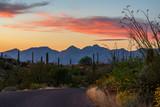 Saguaro NP East, Tucson Arizona