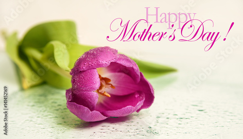 Mothers Day Background With Tulip Flower And Happy Text
