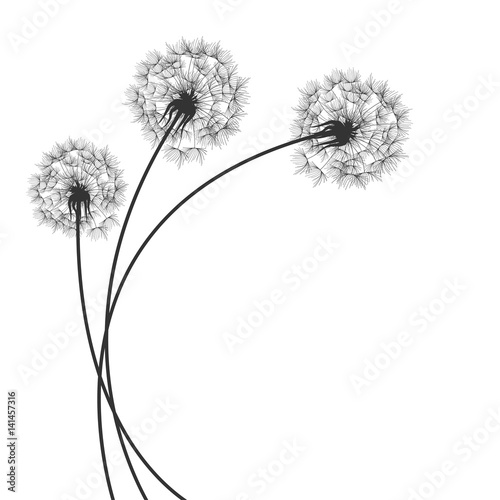 Fototapeta Background with Dandelions