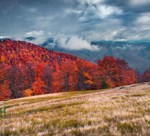 Fototapeta Colorful autumn scene on the Svydovets mountain range in Carpathian mountains.