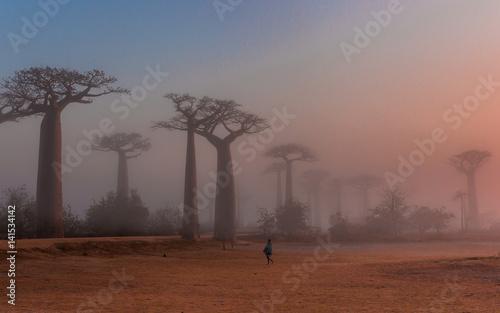 Fotobehang Baobab Baobab alley Madagascar