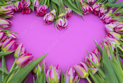 pink tulips on a pink background. Frame of flowers. Valentine's Day, Mother's Day