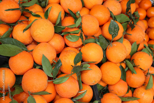 oranges with leaf after the harvest in the Mediterranean orchard
