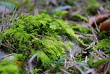 mech w runie leśnym - 141561712