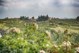 Tuscany landscaoe
