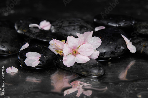 Poster Spa still life with pebble and with cherry blossom