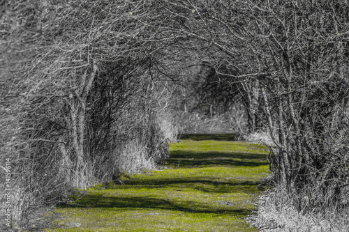 Fototapeta Forest Path