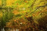 Colorful autumn lake