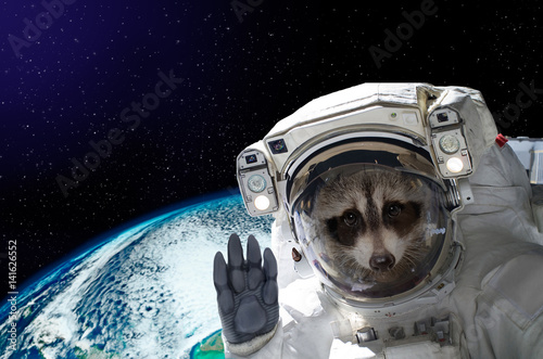 Portrait of a raccoon astronaut in space on background of the globe. Elements of this image furnished by NASA. - 141626552