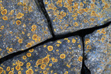 Yellow lichen growing on gray stones