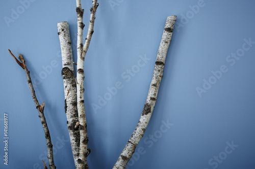 birch tree on blue wall modern interior design - 141668977