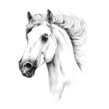 horse head profile sketch vector graphics - 141670336