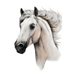 the white horse head profile sketch vector chart color picture - 141670370