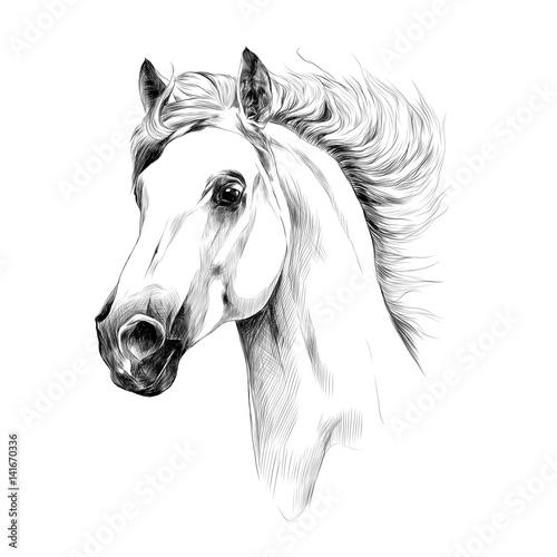 horse head profile sketch vector graphics - 141670336