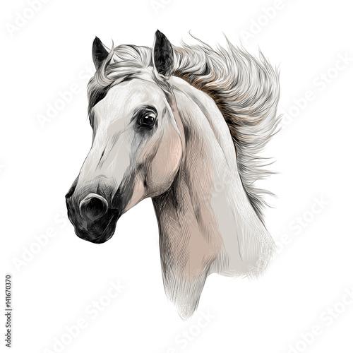 Fototapeta the white horse head profile sketch vector chart color picture