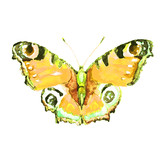 beautiful yellow butterfly, isolated  on a white,watercolor
