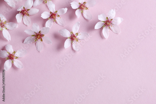 Poster Almond blossom on pink background