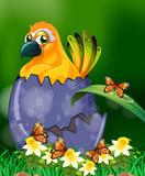 Yellow bird hatching egg in garden