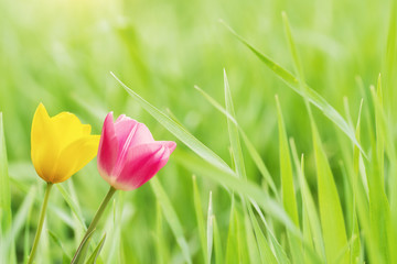 Flowers on Green Grass,Spring Concept
