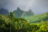 Rainbow on Moorea island jungle and mountains landscape - 141725947