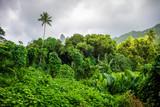 Moorea island jungle and mountains landscape - 141726327