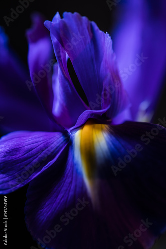 spring flowers background - 141751919