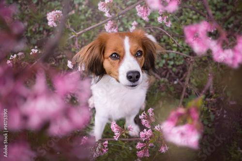 pies-wsrod-kwiatow