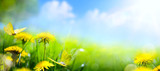 Easter spring flower background; fresh flower and yellow butterfly on green grass background - 141778940