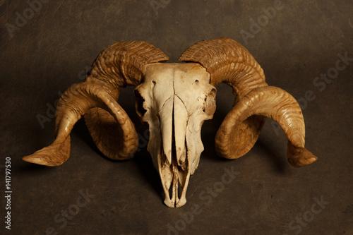 Poster Goat skull