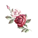 The image of a rose.Hand draw watercolor illustration - 141810128