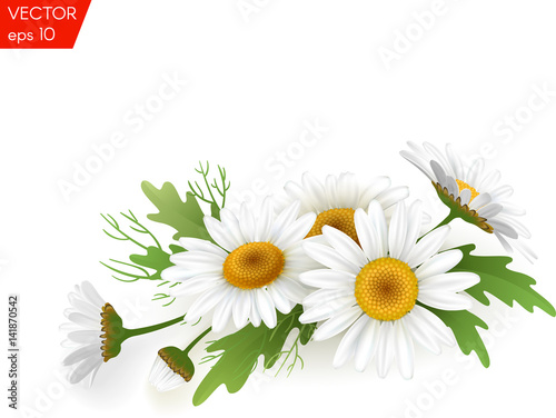 Bouquet realistic daisy, camomile flowers on white background. Vector illustration card