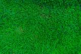 Fototapety Green grass land texture