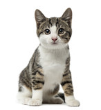 kitten domestic cat sitting, 3 months old , isolated on white