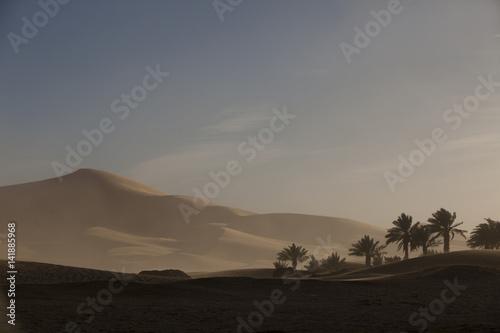 palmiers dans le désert et dunes de sable Poster