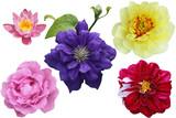 Flower Set - 141896734