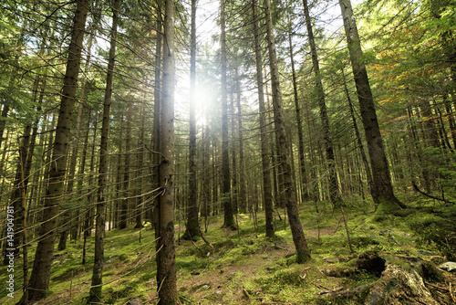trees and mossy rocks in the woods