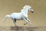 White horse galloping - 141915595
