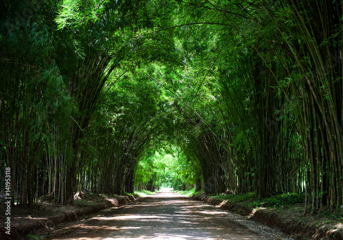 Tunnel bamboo tree