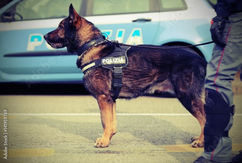 Italian police dog while patrolling the city streets before the Poster