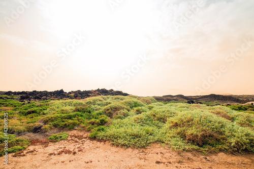 plzntes grâces dans le désert Poster