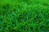 Fototapety Fresh green grass in garden