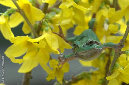Poster Laubfrosch in Blumen