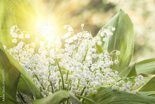Fotobehang Lelietjes van dalen Flower lily of the valley, closeup, spring