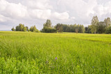 Fototapety Sunny meadow with green grass