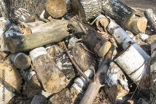 Pile of birch logs Poster