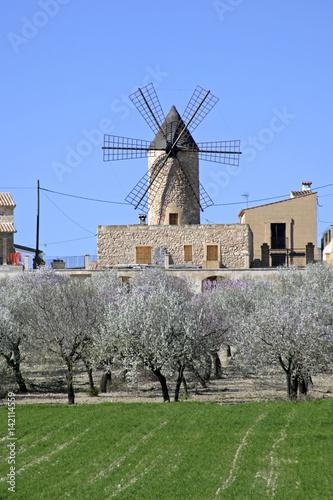 Poster Windmill in Sineu on Majorca, Balearic Islands, Spain, Europe