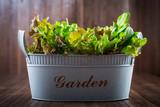Fototapety Fresh salad