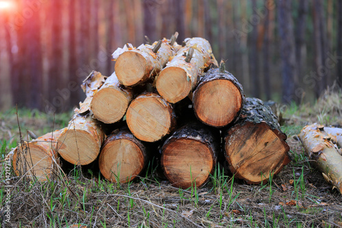 logs on evening meadow Poster